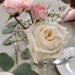 Garden rose White O'hara
