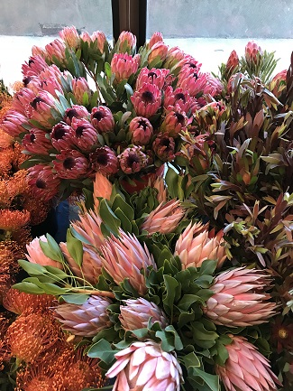American Grown Proteas