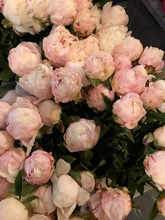 American grown peonies, American Grown Flowers